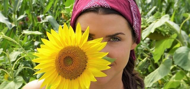 sun-flower-2699771_640